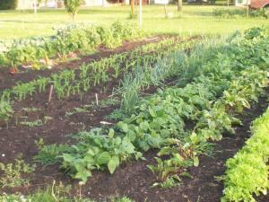 quarter-acre