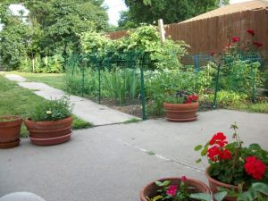 One corner of our backyard garden in Lincoln, Nebraska.